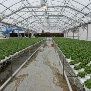 Однорядные теплицы высота 4,7 м. - промышленные и фермерские теплицы